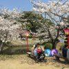 小城公園の桜の開花情報